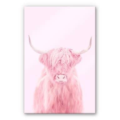 Acrylic Print Fuentes - Highland Cow