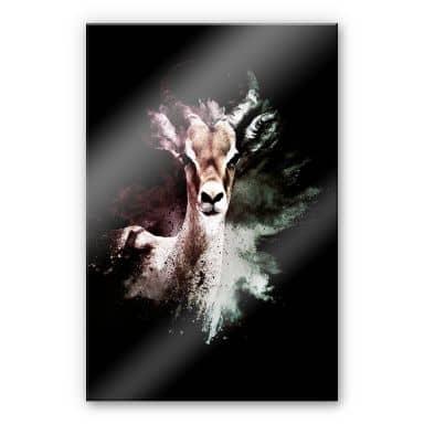 Acrylglasbild Hugonnard - Wild Explosion: Antilope