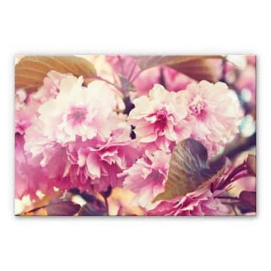 Tableau en verre acrylique - Fleurs de cerisier vintage