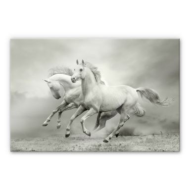 Galopping Horses XXL Wall picture