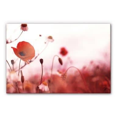 Poppy Impressions Acrylic print