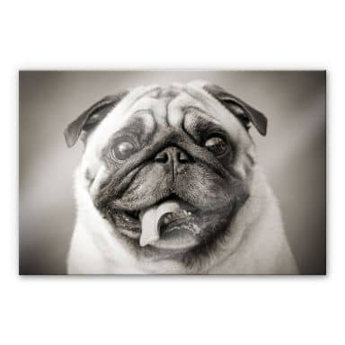 Lovable Pug XXL Wall picture