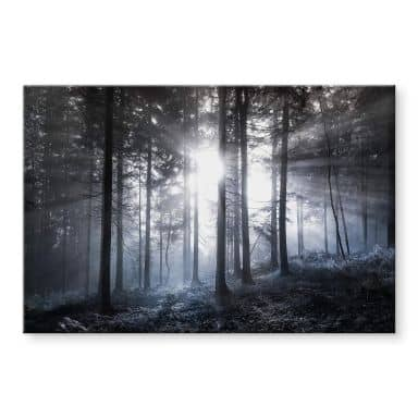 Acrylglasbild Sonnenstrahlen im Wald Blau