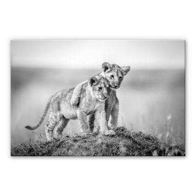 Acrylglasbild Sink - Brothers for Life - schwarz-weiß