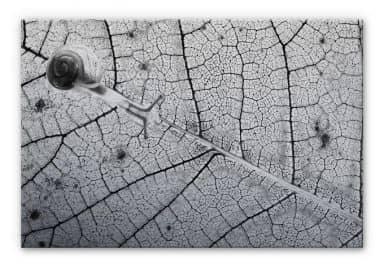 Alu-Dibond Bild Bravin - Transparenzen