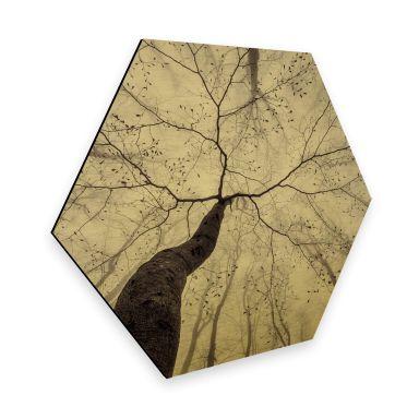 Hexagon - Alu-Dibond-Goldeffekt Pavlasek - Ein Blick in die Baumkronen