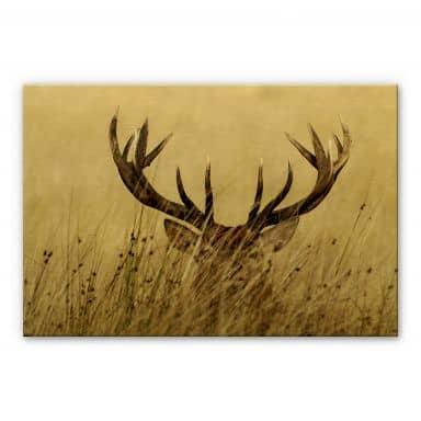 Alu-dibond gold - Deer