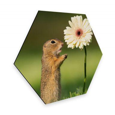 Hexagon - Alu-Dibond Dick van Duijn - Squirrel with Gerbera