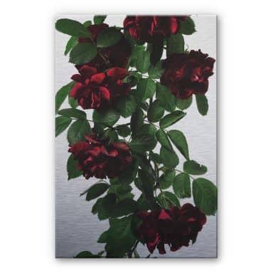Alu-Dibond mit Silbereffekt Kadam - Flora Rose