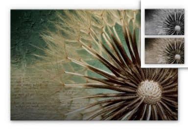 Dandelion - Poetry Aluminium print