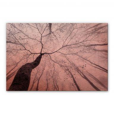 Tableau en Alu-Dibond Pavlasek effet cuivré - Vers la cime des arbres