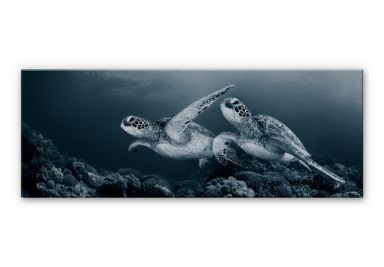 Alu-Dibond Bild Narchuk - Zwei Schildkröten auf Reisen
