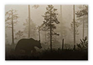 Alu-Dibond Bild Ove Linde - Nebel am Morgen