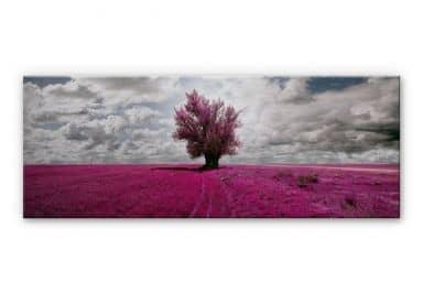 Alu-Dibond Bild The Lonely Tree - Panorama