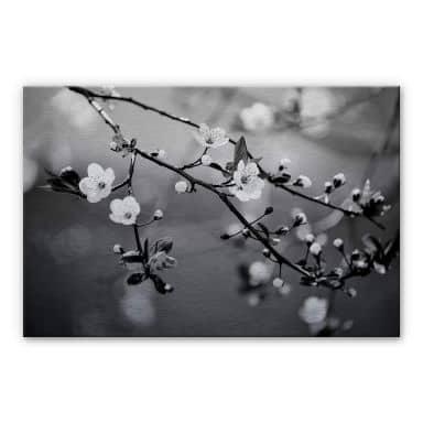 Spring Awakening Aluminium Print