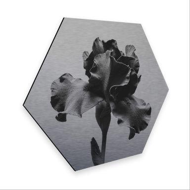 Hexagon - Alu-Dibond-Silbereffekt - Kadam - Schwertlilie