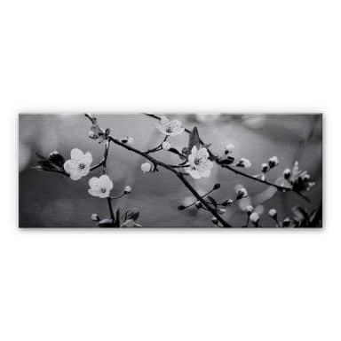 Awakening Spring - panorama Aluminium print