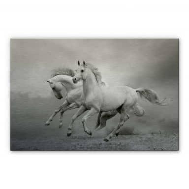 Aluminium Dibond Paarden in Galop