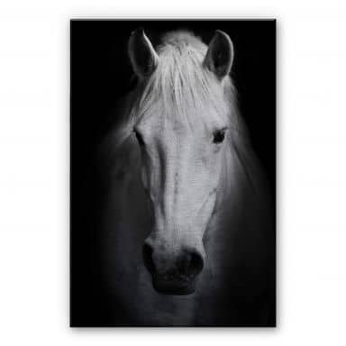 White Horse Aluminium print