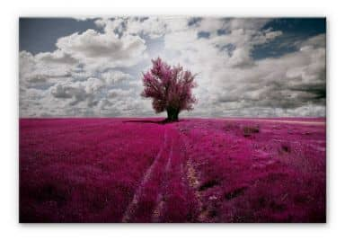 Tableau en Alu-Dibond - The Lonely Tree