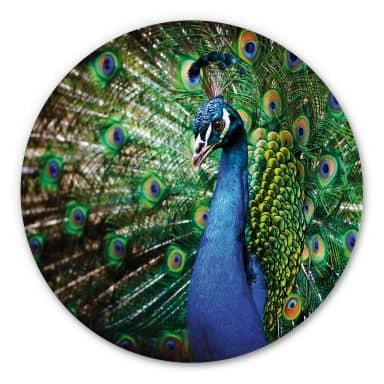 Wandcirkel Prachtige Pauw