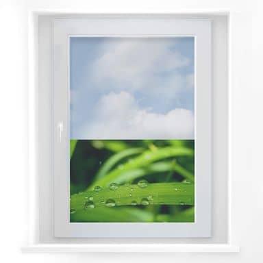 Window decor: Nature 5