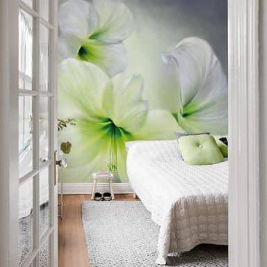 Fototapete Schmucker - Weiße Amaryllis
