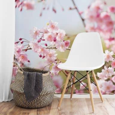 Cherry Blossoms - Photo Wallpaper