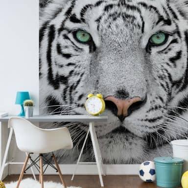 Papier peint photo Tigre de Sunaman - 240x260 cm