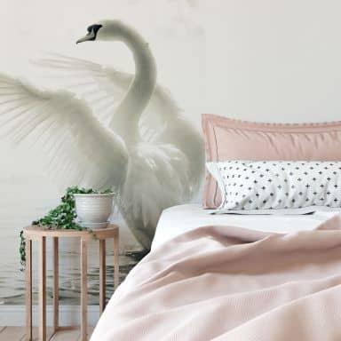 Majestic Swan - Photo Wallpaper