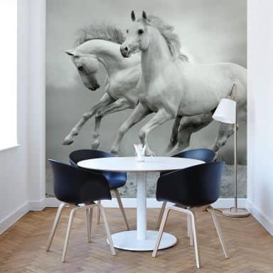 Horses at a Gallop - Photo Wallpaper