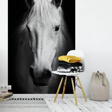 Fototapete White Horse - 144x260 cm