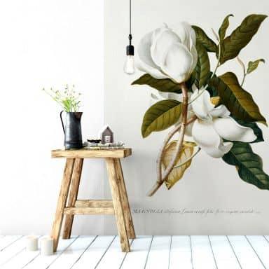 Magnolia by Georg Dionysius Ehret - Photo Wallpaper