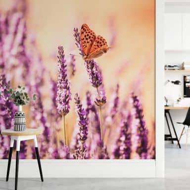 Fototapete Colombo - Der Schmetterling im Lavendel - 384x260 cm