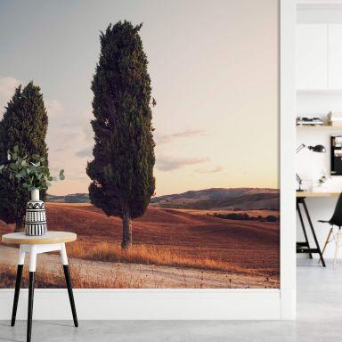 Fototapete Colombo - Drei Zypressen am Weg - 384x260 cm