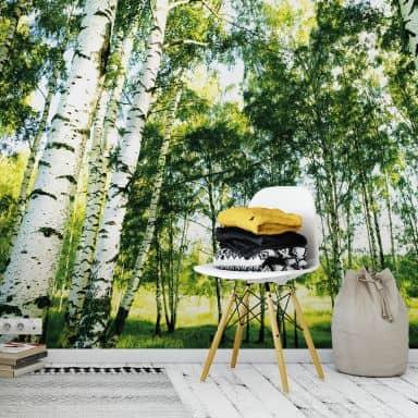 Papier peint photo Forêt ensoleillée