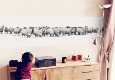 Herd of Sheep - Photo Wallpaper