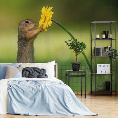 Photo Wallpaper Dick van Duijn - Squirrel holding flower