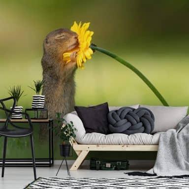Papier peint photo van Duijn - Un petit écureuil sentant une fleur