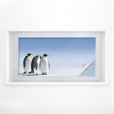 Raamfolie Pinguin – panorama