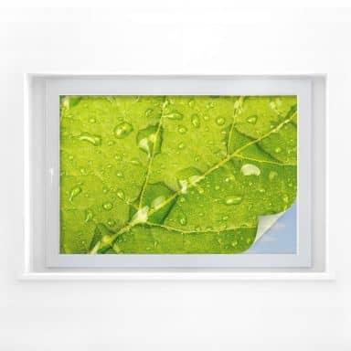 Window foil – Water drops