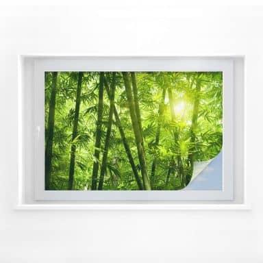 Sichtschutzfolie Sonnenschein im Bambuswald