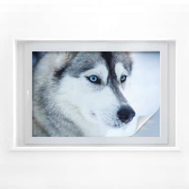 Window foil Blue Eyes