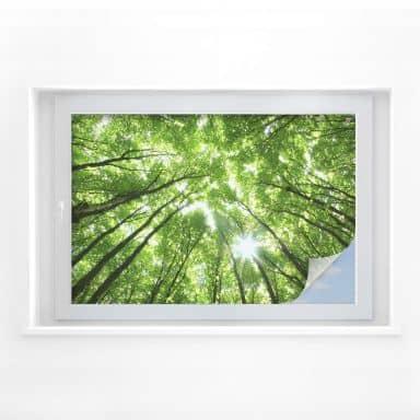 Sichtschutzfolie Baumkronen im Wald