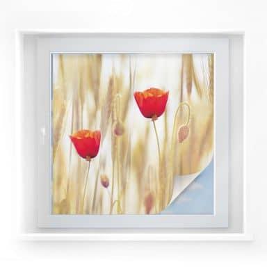 Sichtschutzfolie Poppies - quadratisch