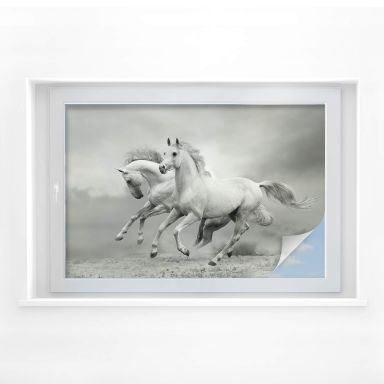 Window foil Horses
