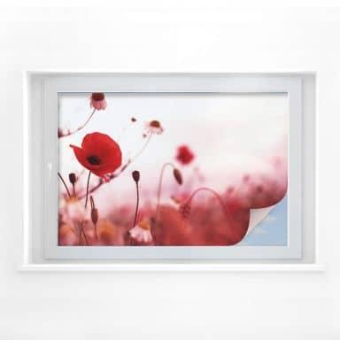 Window foil Poppy impression