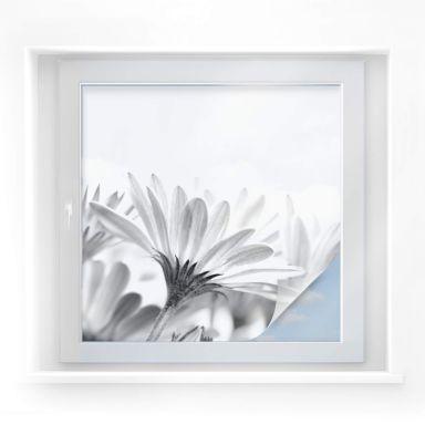 Pellicola adesiva per vetri - margheritina in dettaglio (quadrato)