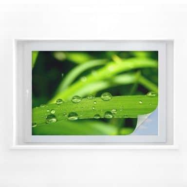 Window foil Nature 05