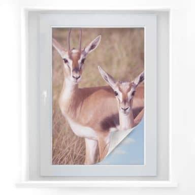 Window foil Goat